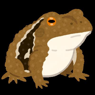 frog_hikigaeru.png