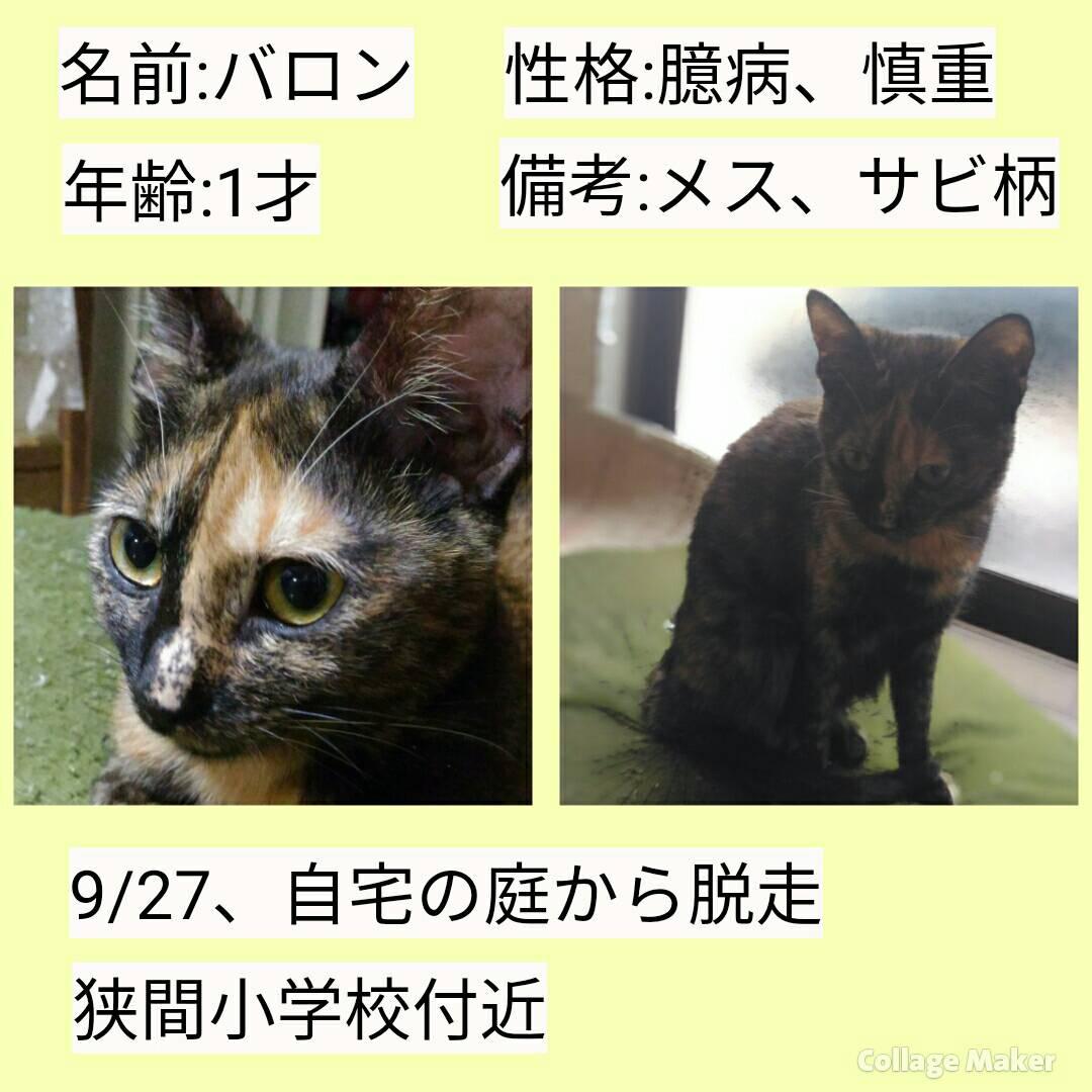 診療案内 | 南が丘動物病院/兵庫県三田市の動物病院